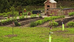 Vegetable garden and pizza oven